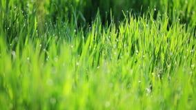 Fond des gras verts clips vidéos
