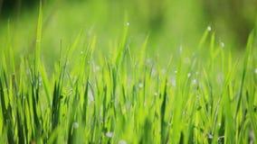 Fond des gras verts banque de vidéos