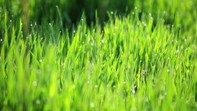 Fond des gras verts filtrant l'appareil-photo banque de vidéos