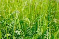 Fond des herbes sauvages Photos libres de droits