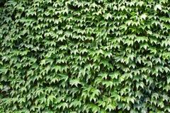 Fond des lames vertes Photos stock