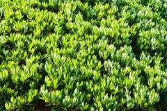Fond des lames vertes Photos libres de droits