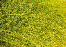 Fond des lames vertes Images stock