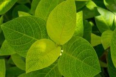 Fond des lames vertes fraîches Photographie stock