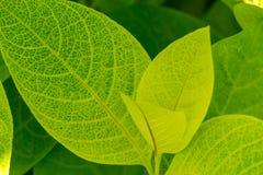 Fond des lames vertes fraîches Images stock