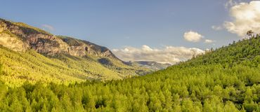 Fond des montagnes d'un paysage des pins verts essentiels photographie stock libre de droits