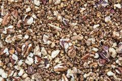 Fond des noix de pécan et des noix criquées avec le brun caramélisé Photos stock