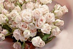 Fond des nombreuses petites roses roses sensibles Images libres de droits