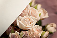 Fond des nombreuses petites roses roses sensibles avec l'espace pour Images libres de droits