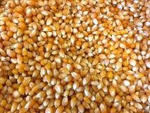 Fond des noyaux de maïs, cru unpopped photographie stock