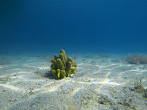 Fond des océans Image stock