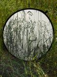 Fond des ombres d'herbe sur le réflecteur diffus de photo sur le fond d'une herbe de champ photographie stock