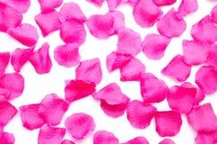 Fond des pétales roses Images libres de droits
