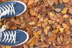 Fond des paires bleues de chaussure de toile avec les feuilles d'automne tombées Photos stock