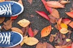 Fond des paires bleues de chaussure de toile avec les feuilles d'automne tombées Image stock