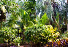 Fond des palmiers comprenant le bambou Images stock