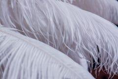 Fond des plumes blanches de couleur Photo libre de droits
