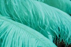 Fond des plumes de couleur de menthe de bleu Photographie stock libre de droits