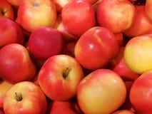 Fond des pommes rouges et jaunes photo libre de droits