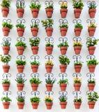 Fond des pots de fleur Photo stock
