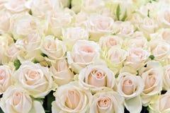 Fond des roses blanches Images libres de droits