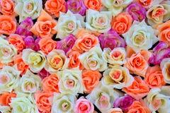 Fond des roses colorées Images stock