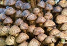 Fond des toadstools photo stock