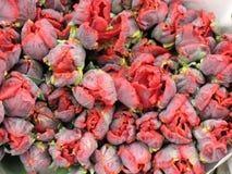 Fond des tulipes bouclées rouges de Golandsky Image stock