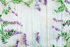 Fond des wildflowers Fond pour une banni?re avec des couleurs naturelles Banni?re avec des fleurs de Copyspeis Fond floral Fleurs image libre de droits