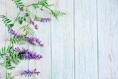 Fond des wildflowers Fond pour une banni?re avec des couleurs naturelles Banni?re avec des fleurs de Copyspeis Fond floral Fleurs image stock