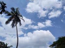 Fond du ciel bleu nuageux blanc photos libres de droits