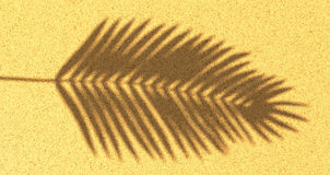 Fond du sable de plage de l'ombre d'une branche de paume Image stock