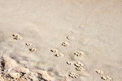 Fond - empreintes de pas de chien dans le sable le long d'un coin diagonal avec le sable supérieur de coin juste - pièce pour le  Image libre de droits