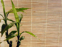 Fond en bambou photographie stock