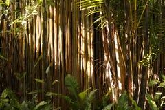 Fond en bambou d'arbres Images libres de droits