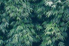 Fond en bambou de feuilles pour la conception de contexte de nature Images libres de droits