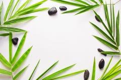 Fond en bambou de lame Livre blanc avec l'ornement tropical de feuille Photo libre de droits