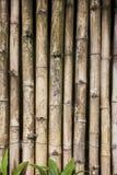 Fond en bambou de nature d'écran Images stock