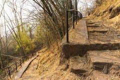 Fond en bambou de nature de traînée de voie de forêt de montagne photos stock