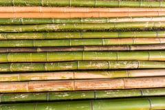 Fond en bambou de Polonais Image stock