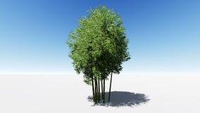 Fond en bambou en bambou Photographie stock libre de droits