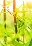 Fond en bambou frais Photographie stock