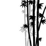 Fond en bambou monochrome de vecteur Images stock