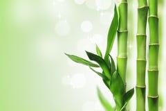 Fond en bambou vert Photo stock