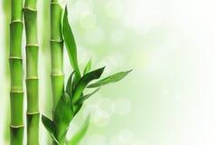 Fond en bambou vert Photographie stock libre de droits
