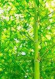 fond en bambou vert Images stock