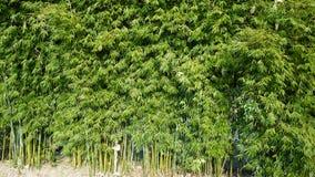 fond en bambou vert Photos libres de droits