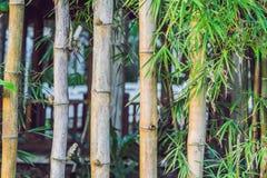 Fond en bambou vert de barrière Frontière de sécurité faite en bambou Images libres de droits