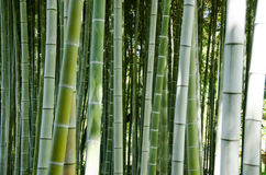 Fond en bambou vert de forêt Image stock