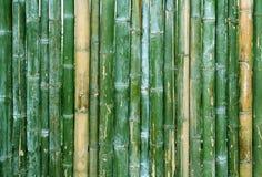 Fond en bambou vert de texture de barrière Image libre de droits